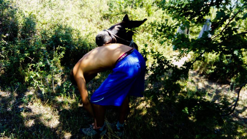 Fela il nuovo asino che accompagnerà Nicola Winkler non fare blog di Italia che cambia