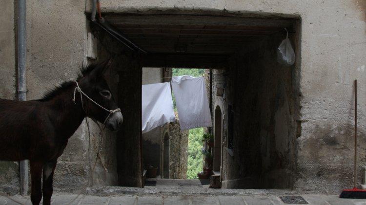 Come seguire su strada Nicola Winkler e il suo asino Fela per contribuire al film collettivo Non Fare L'asino